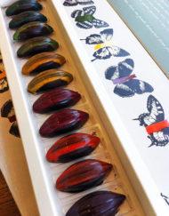 bombones colección de autor El Aderno